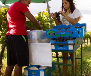 Fresh Fruit Picking